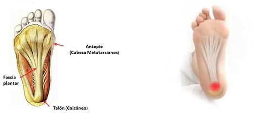 acido urico medicina homeopatica acido urico bajo en sangre sintomas ataque de gota frio o calor